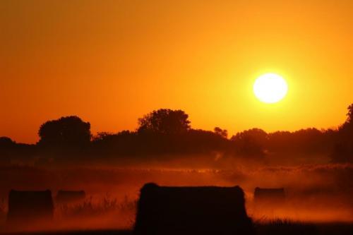 Morgenrot im Billigheimer Bruch