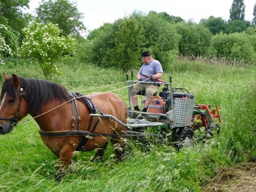 Freilandschulung Grünlandpflege mit Arbeitspferd
